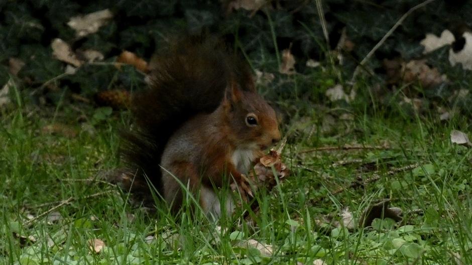 Ook de eekhoorns hebben de Lente in de kop