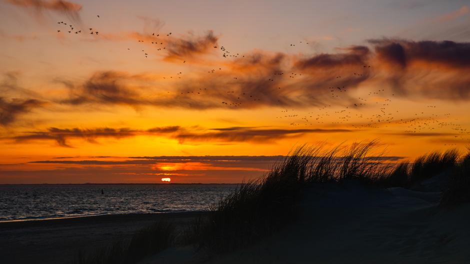 Zonsondergang met wind veren en vogels