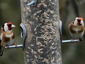 birds on the feeders
