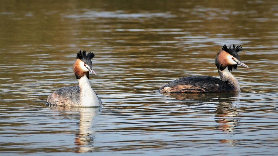 Samen dobberen op het water in de zon