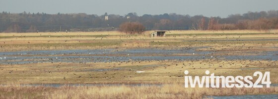 Carlton Marshes a must to see