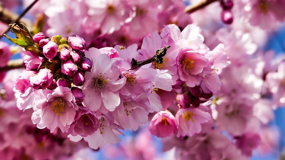 Prachtige lentebloeiers