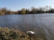 Beautiful views of the uea lake
