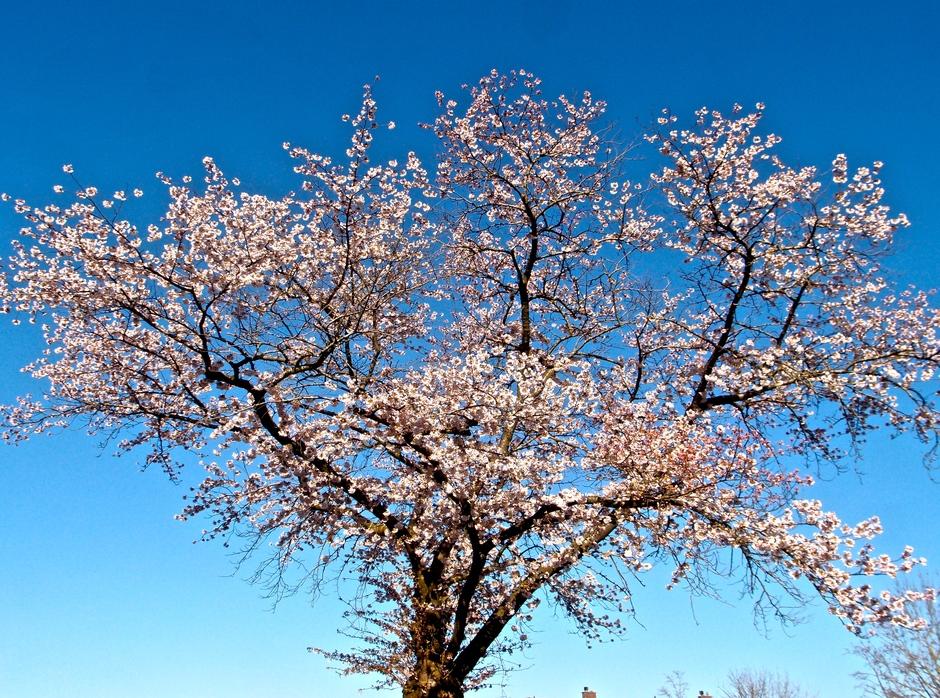 29-03-2021 Japanse sierkers