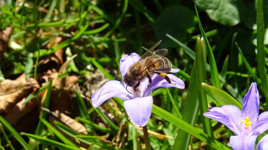 Bijen zijn druk in de weer