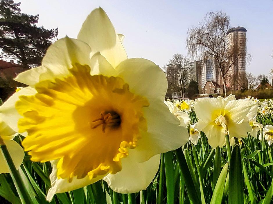 Vrij zonnige lentedag