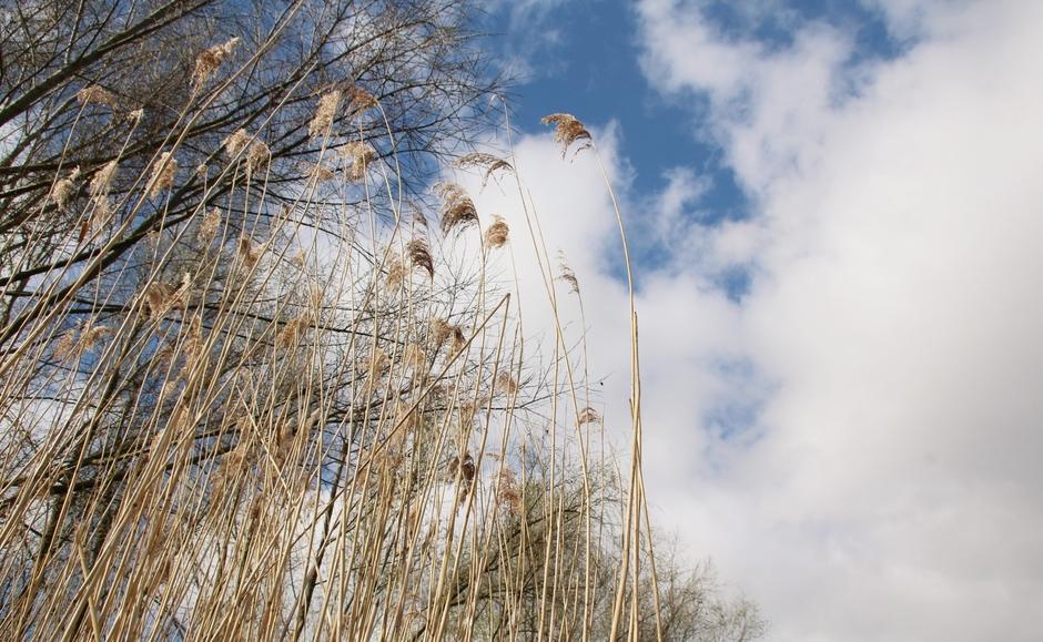 Weersomslag met wolken en frisse wind