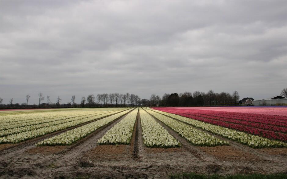 Bloemen kleuren de dag