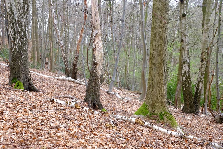 door de bomen zie je het bos