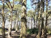Squabmoor  Reservoir Scenes