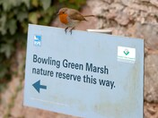 New Bowling Green Marsh Guided Tours Guide