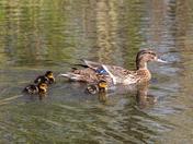 Springtime at Needham Lake