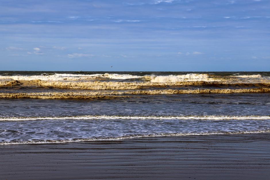 Veel dode Algen in Zee.