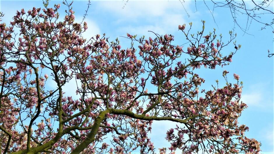 zonnig met een frisse wind en lentebeelden