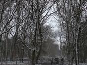 Snowy winter dusk walk