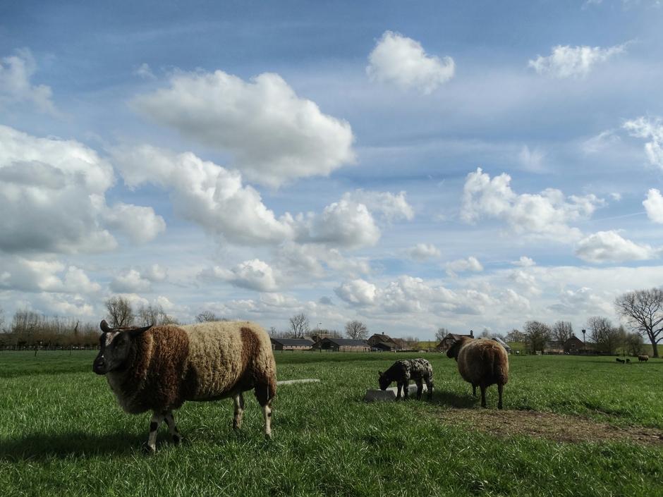 Prachtig wolken