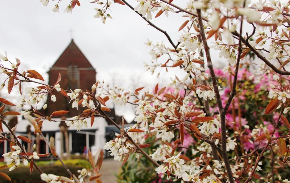 Grijze dag en lentebloeiers