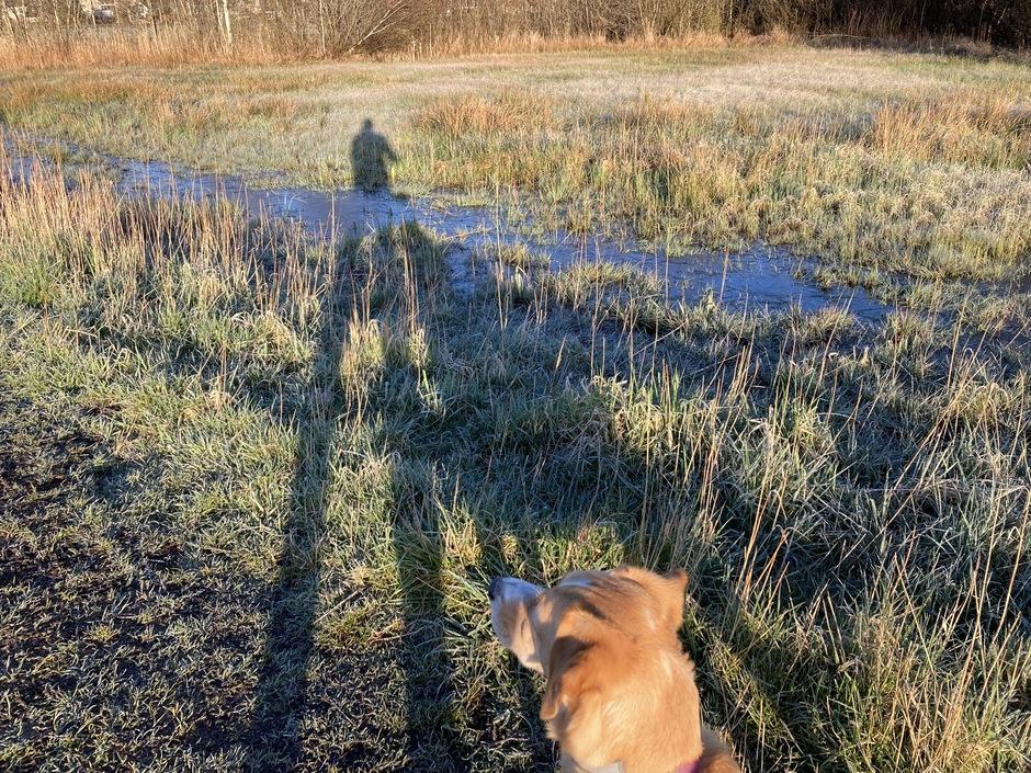 Mijn hond en ik lange schaduwen bij een koude ochtend