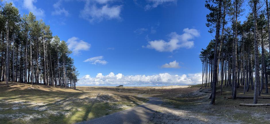 Blauwe lucht na het dennenbos