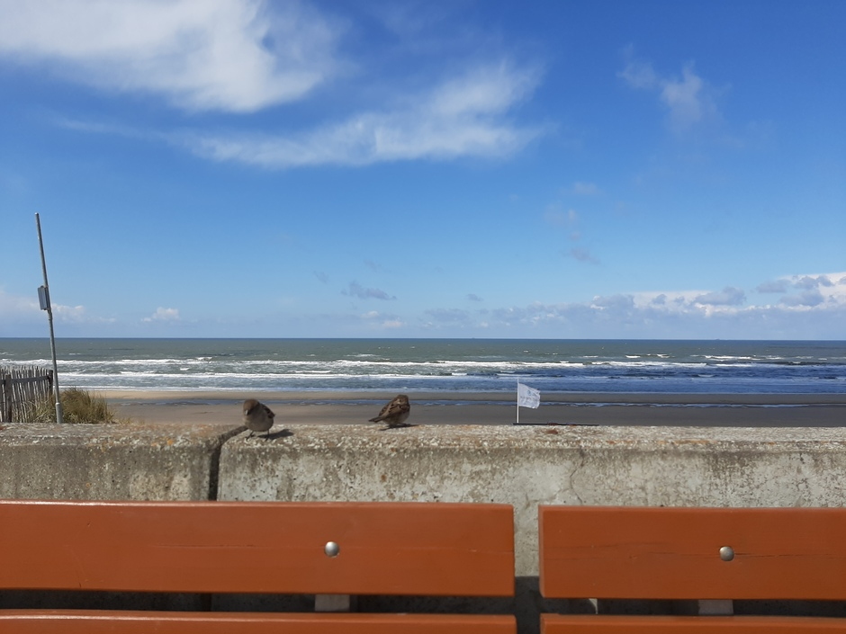 Musjes, uitzicht strand