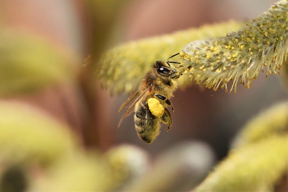 Ga jij ook tellen? Nationale bijentelling 2021 is dit weekend.