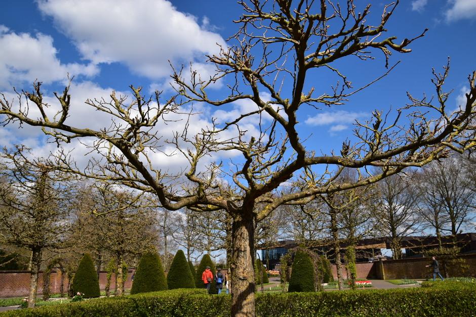 Zon blauw wolken lente keukenhof