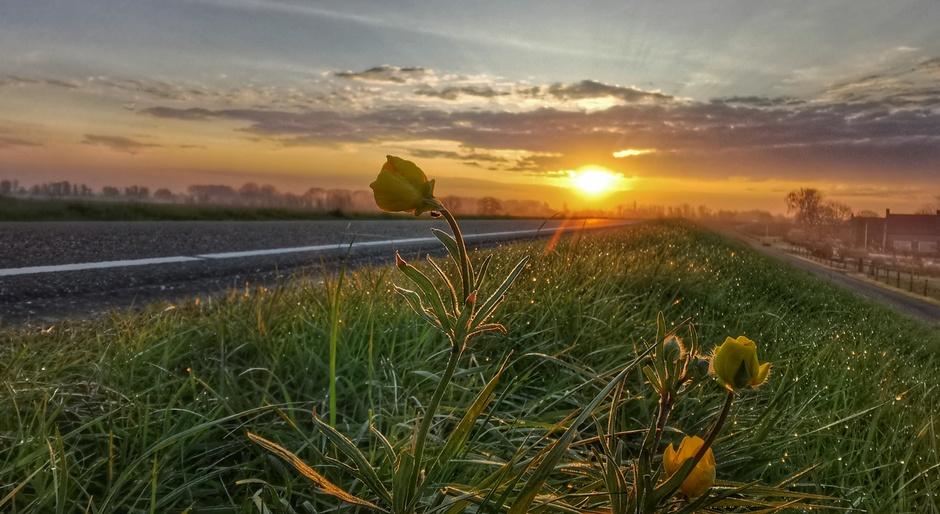 Dauw bij een stralende zonsopkomst