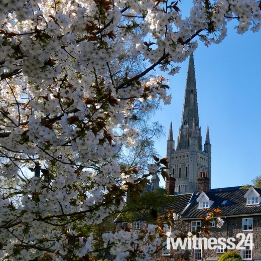Beautiful blossom by Norwich Cathedral