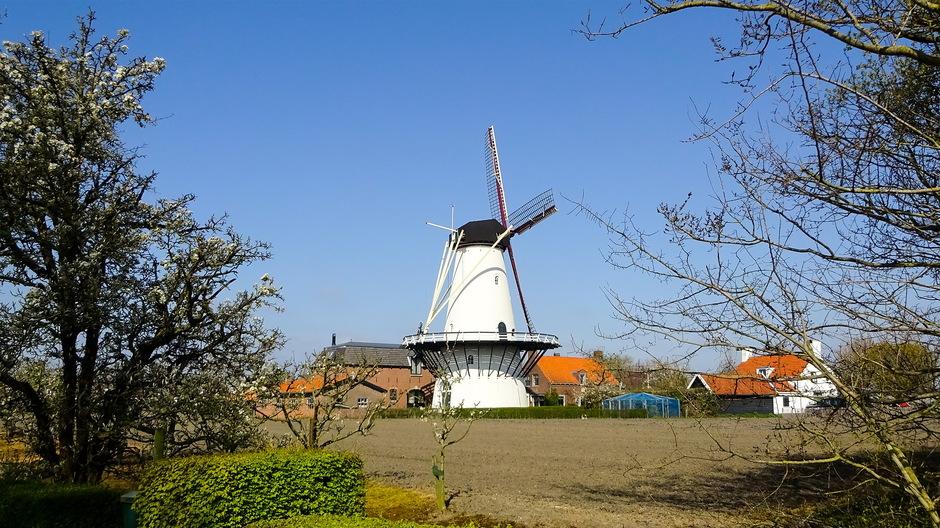 Mooie  zonnige lentedag helder blauwelucht