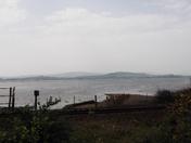 Birds on the Exe Estuary