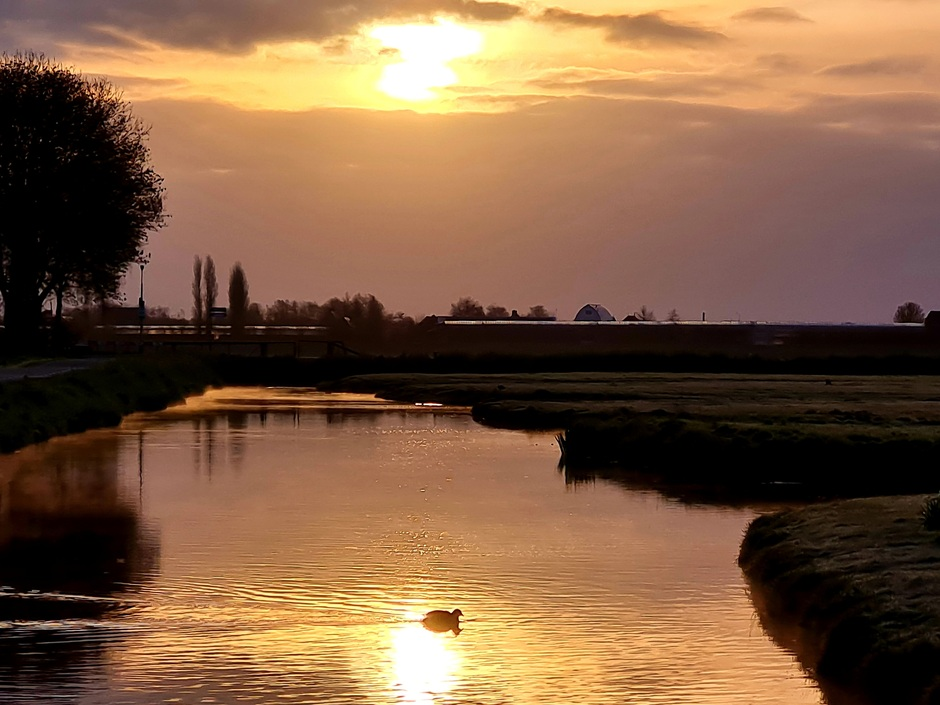 Roelofarendsveen Zonsopkomst water vogel wolken