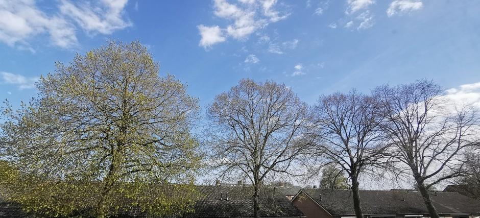 Nog weinig blad aan de bomen, maar het begint te komen nu