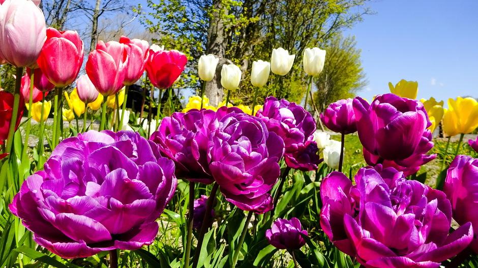 Zonovergoten lentedag en lentebloeiers