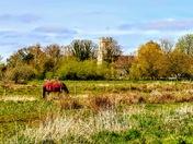Norfolk Countryside