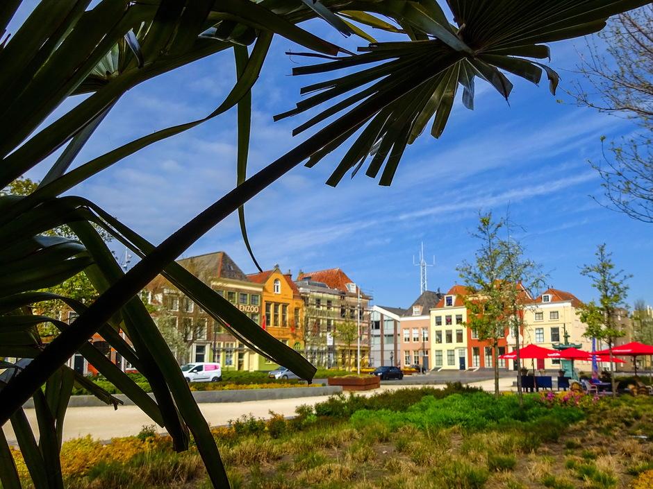 Sluierbewolking en palmbomen