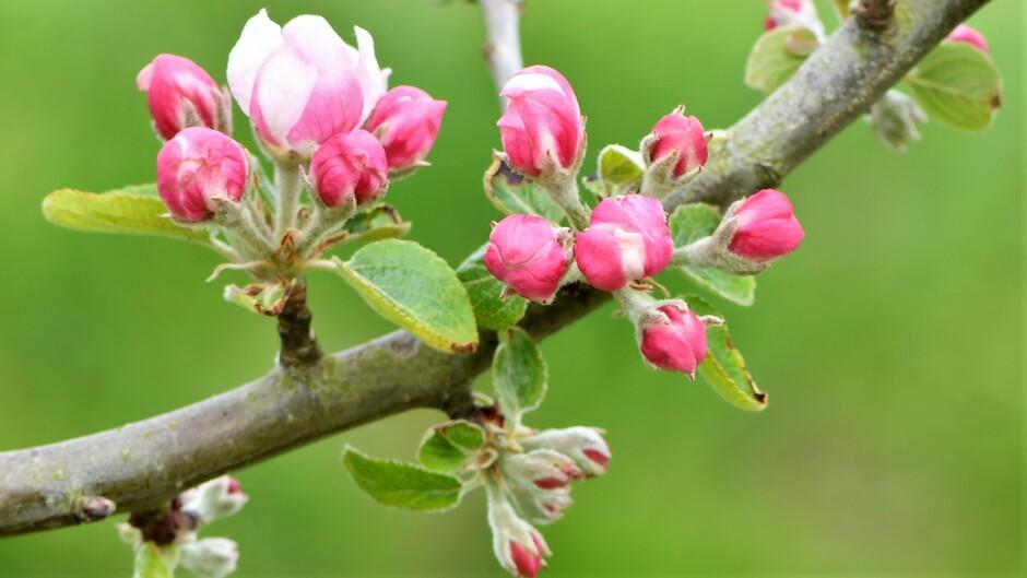 Niet alleen de natuur, ook de fruitboeren zullen wel blij zijn met een bui