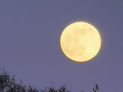 "April supermoon ""Pink Moon"""