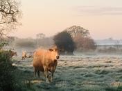 Frosty sunrise in Washbrook