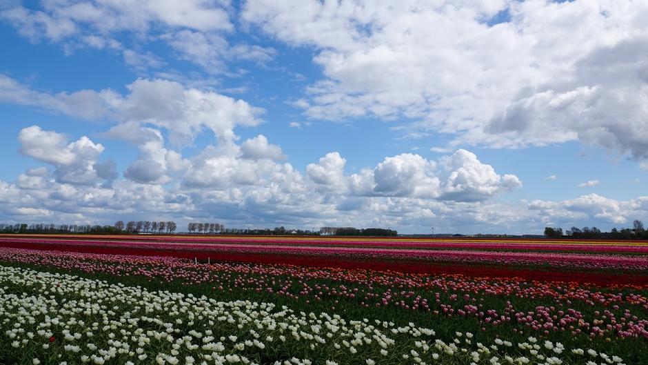 Wat een kleurenpracht in de polder