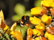 """Busy Bees and """"feed me"""""""