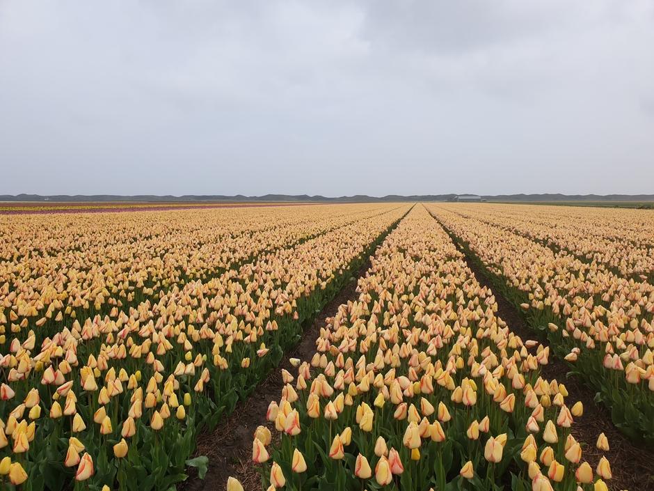 Grijze maar fleurige start van de dag op Texel