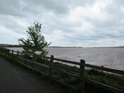 Exe Estuary Cycle Path by the estuary