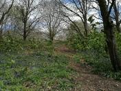 Hadleigh / Raydon Railway Walk