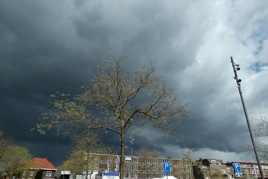 Van zwart naar blauw, fris groene boom.