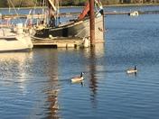 Evening walk at Melton, Suffolk