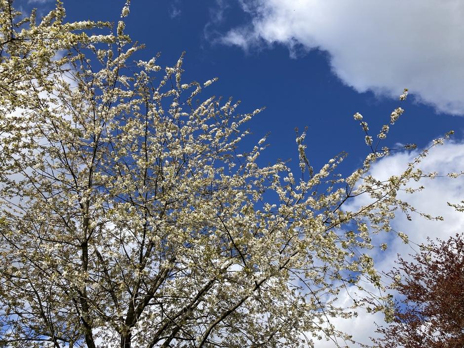 Vandaag toch ook een mooie lente