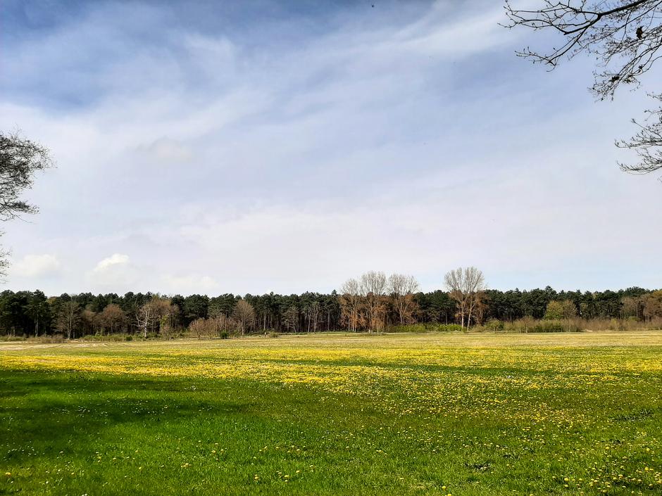 Sluierbewolking, zon en velden vol met paarden & pinksterbloemen vanmiddag