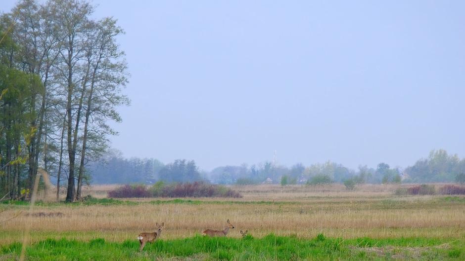 Vroege lente-ochtend in het rietland