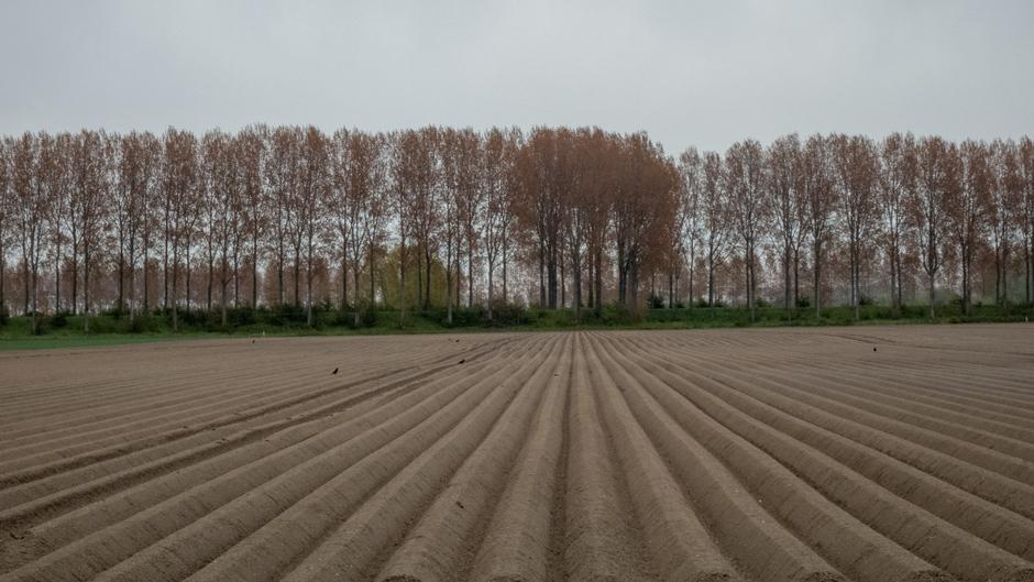 Aardappelruggen in een grijze lucht