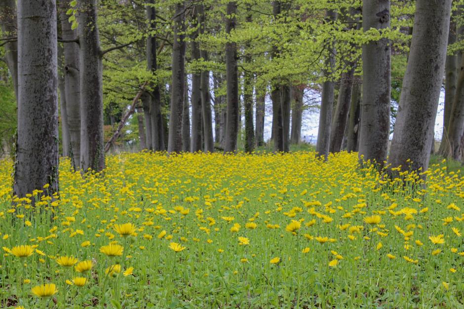 Lucht was grijs en nog eens grijs, hele dag , dan maar in de regen naar het bos van Heemskerk